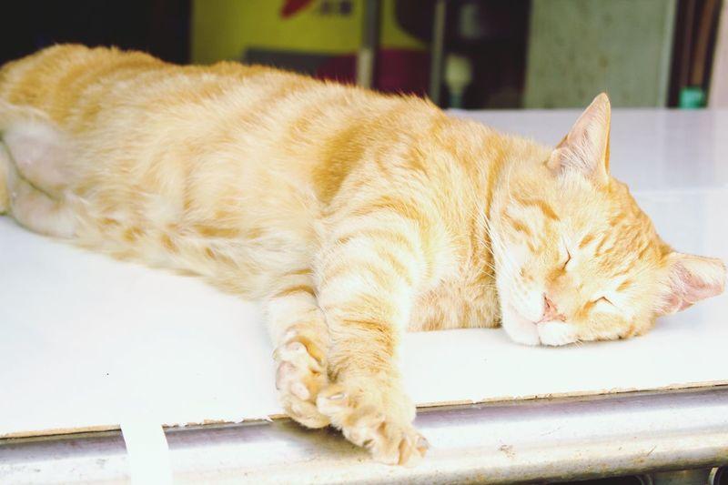 Kitten Cats Trainstation Public Transportation 貓咪 Take A Trip