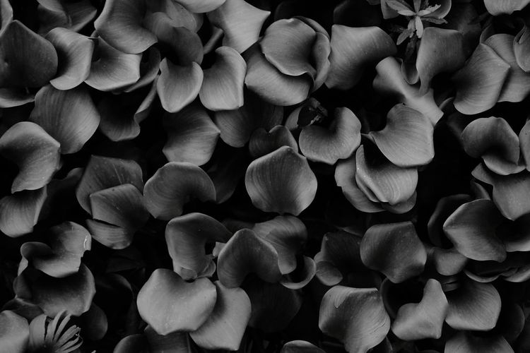 black and white Water Plant Wild Outdoors Outdoor Photography River Riverside Blackandwhite Biology Close-up Flower Head Petal The Creative - 2018 EyeEm Awards