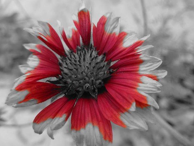 U never know , what can happen !!! Just keep on enjoying , coz its LIFE Life Live Thoughts Photography Oye_my_click Mysimpleclick Hppyflwrs Igers_wanderlust Igersofindia Everyday_India Indianshutterbugs SixtySecondsOfLOVE Udaipurities TruePhotolover Bestnatureshots Exclusiveshotz BehindTheShoots Flowerpower PartialColorTechnique NewTest Mysnap BeautySnapi