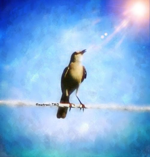 """You never really understand a person until you consider things from his point of view... Until you climb inside of his skin and walk around in it."" (Harper Lee - To Kill A Mockingbird) Backyard Birder Repix App NEM Painterly"