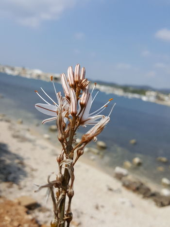 Beach Beach Plant Mallorca Portocolom Spring On Mallorca Spring Springtime Nature No People Day Flower Plant Desert Close-up Beauty In Nature