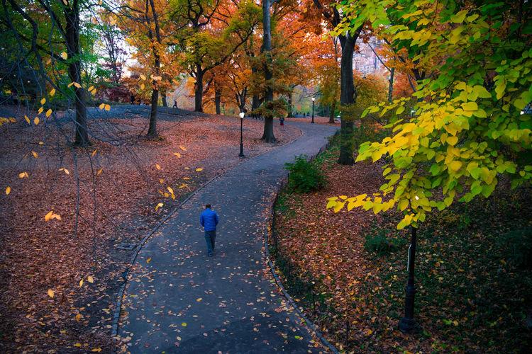 Man walking on road amidst autumn trees