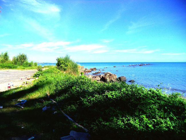 Tropical Climate Sea Nature Beauty In Nature Beach Scenics Sea Life Tropical Green Color Sunny Day