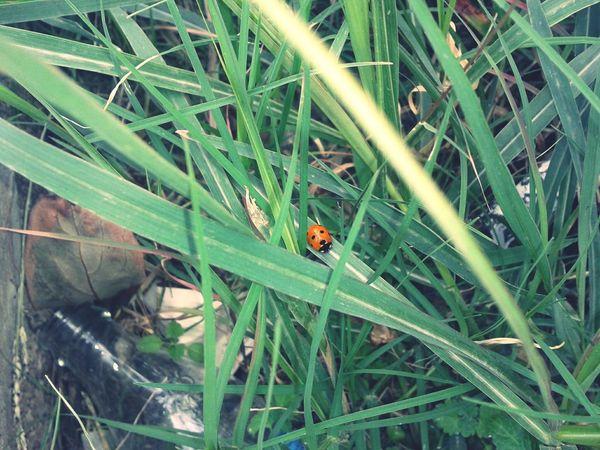Protecting Where We Play Natural Cute Ladybug