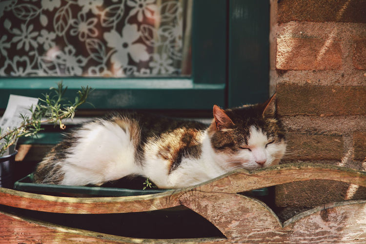 Animal Themes Beauty Sleep Cat The Essence Of Summer Domestic Cat Feline Home Home Interior Indoors  Lying Down Mammal One Animal Pets Portrait Relaxation Relaxing Rest Resting Sitting Sleeping SUPPORT Two Animals Whisker Window Cat Pet Portraits