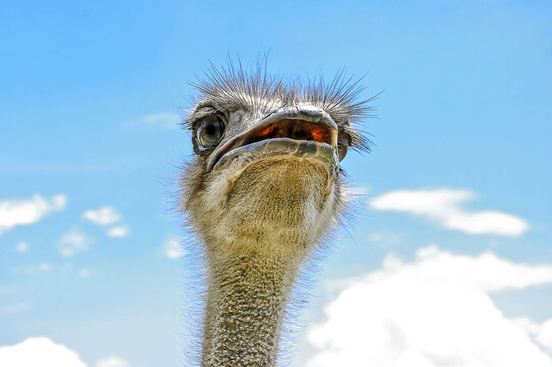 Low angle view of ostrich against sky