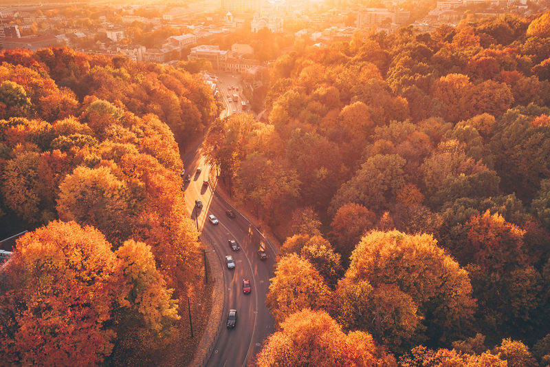 Golden autumn City Kaunas Lietuva Aerial View Aerial Drone  DJI X Eyeem Mavic 2 Pro Mavic 2 Park Foliage Europe Road Transportation Tree Plant Car Autumn High Angle View Mode Of Transportation Nature Motor Vehicle Change No People Scenics - Nature Beauty In Nature Orange Color Day Land Vehicle on the move Direction The Way Forward Outdoors