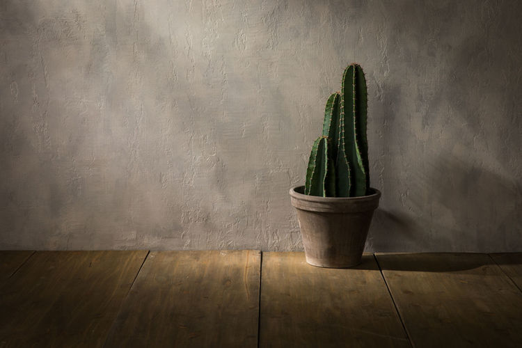 Cacti Cactus Copy Space Flooring Home Plant Sunlight Textured  Decoration Gray Background House Houseplant Indoors  Interior Design Potted Plant Shadow Still Life Succulent Plant Wood - Material