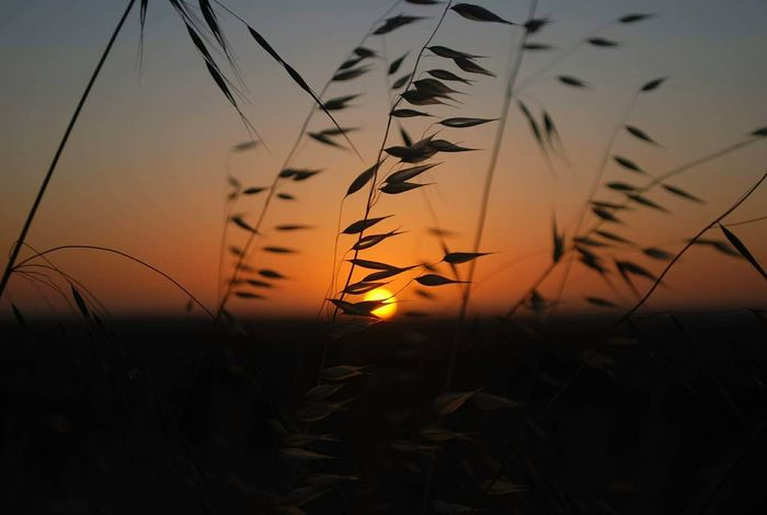 Sunset Nature Silhouette Plant Close-up Outdoors Adventure Eyeemphotography EyeEm Best Shots Beauty In Nature Ayeem! What's Up ??  First Eyeem Photo Popular Photos Lifestyles Eyem Gallery Fresh on Market 2016 Dusk Rural Scene Landscape No People Sky Day City Life Defocused sunset #sun #clouds #skylovers #sky #nature #beautifulinnature #naturalbeauty photography landscape Sunsummer