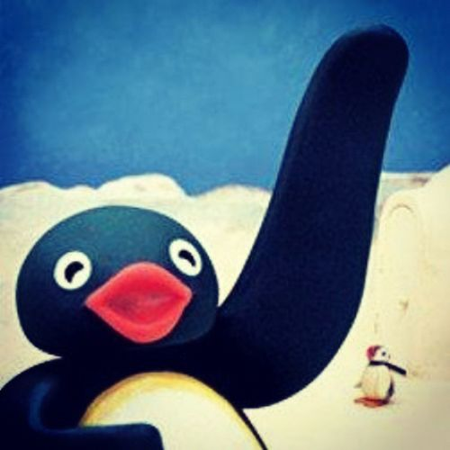 Pingu Rockstar Southpole
