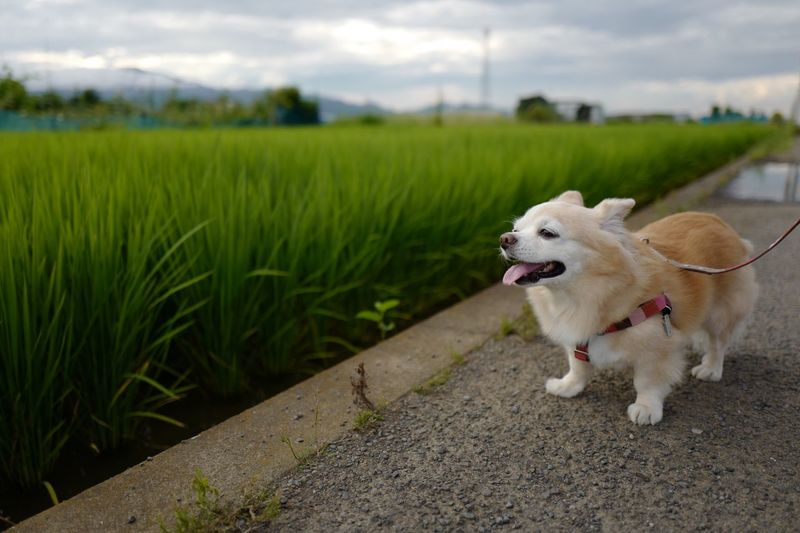 Dog on country road along landscape