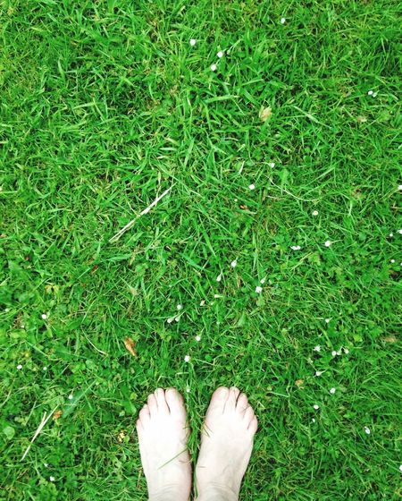 Happy Saturdaysong_eyeemchallenge what make Happy Saturdaysong_eyeemchallenge Feeling The Grass Beneath My Feet Grass Green Color Human Leg One Person Human Body Part Low Section Plant Standing Body Part Lifestyles Human Foot Directly Above Field Personal Perspective Real People