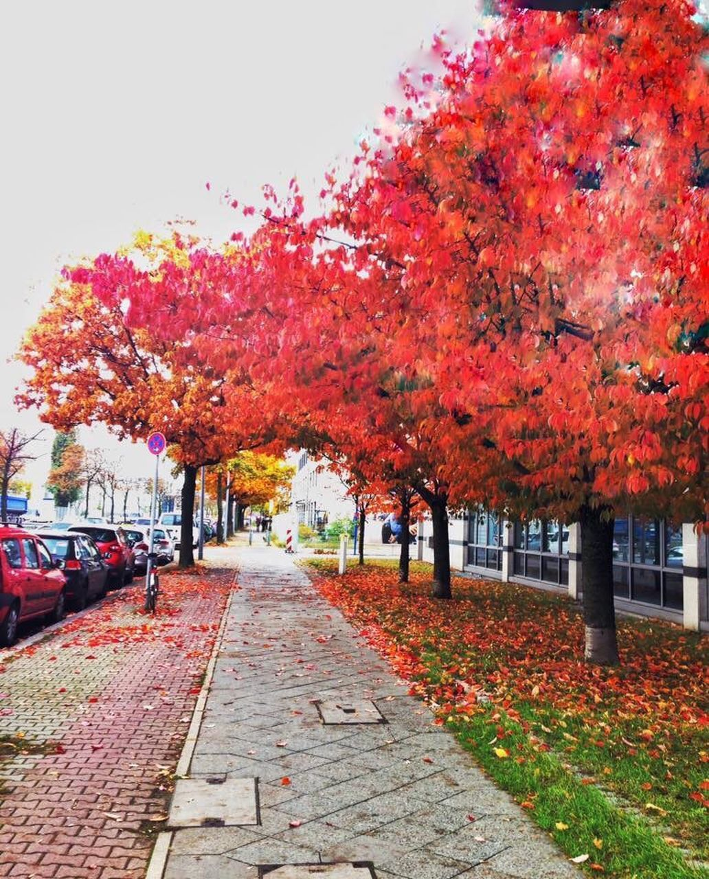 autumn, change, tree, leaf, nature, orange color, red, beauty in nature, no people, outdoors, the way forward, day, scenics, growth, tranquility, maple tree, branch, maple leaf, maple, sky