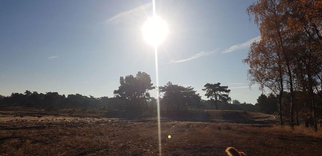 Tree Sky Sunbeam Lens Flare Sunrise Silhouette Solar Flare