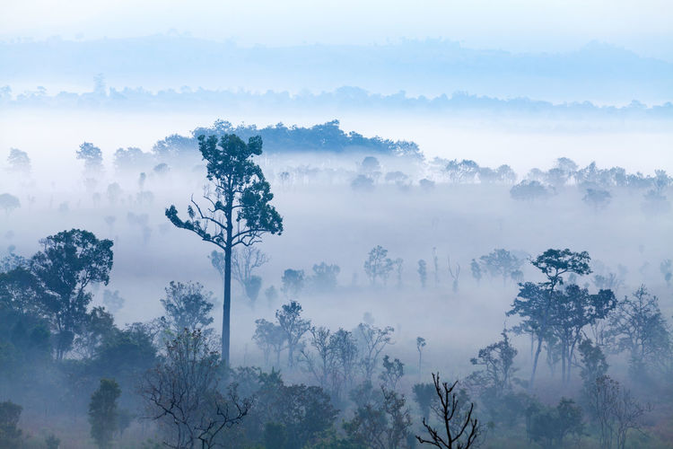 Beauty In Nature Branch Day Fog Forest Forest Fire Hazy  Landscape Mist Nature No People Outdoors Power In Nature Scenics Sky Tranquil Scene Tranquility Tree