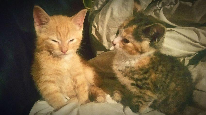 Kittens <3 Loveliest  Cutness❤Overload Brother & Sister Sleepykitten Wonderful Moment Love My Cat 😻 KittyCats Petlovers 🌻🌼🌻🌼🌻🌼🌻🌼🌻🌼🌻🌼🌻 😺 💓 😻 💕 🐈 💞 😽 💖 😸