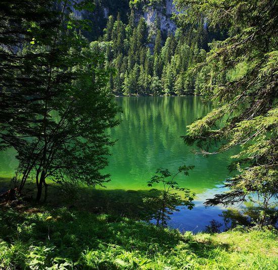 Lake water green nature no people Tree Water Lake Reflection Sky Green Color Lakeshore