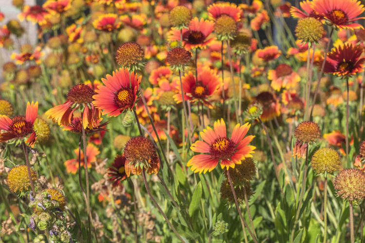 Close-up Flowering Plant Flower Plant Vulnerability  Fragility Freshness Beauty In Nature Growth Flower Head Inflorescence Petal No People Coneflower Focus On Foreground Nature Day Pollen Yellow Field Outdoors