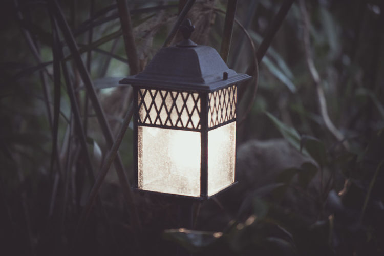 Glow In The Dark Illuminated Illumination Lantern Leafs Lighting Nature Night Night Light Plants