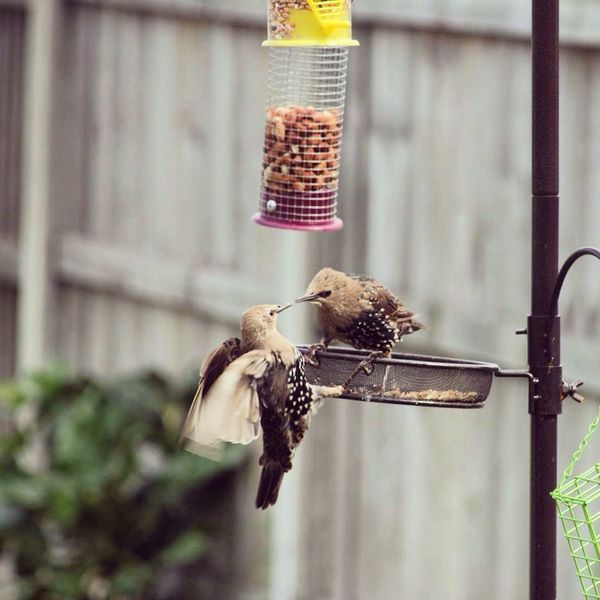Wings Birds_collection Birdfeeder Birds Of EyeEm  Birds