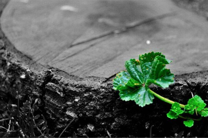 Alone Green Blackandwhite Siyahbeyaz Yalnızlık