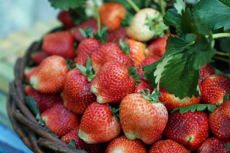 Close-up of strawberries