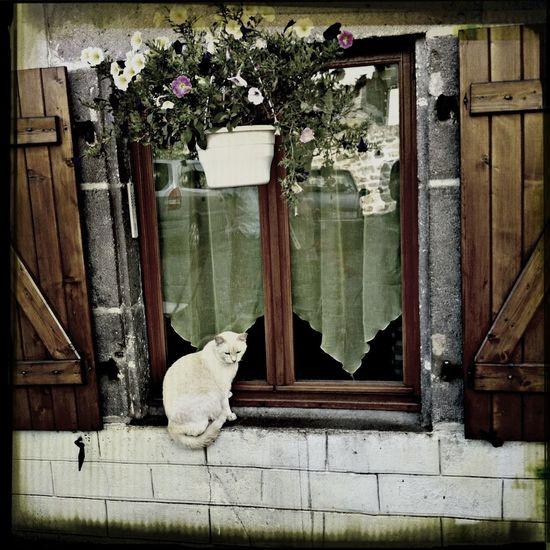 Cat Furball Peaceful Evening