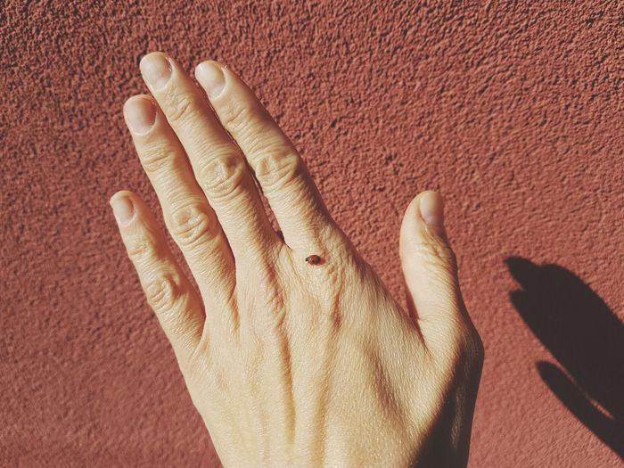 Cropped hand with tiny insect against brown wall
