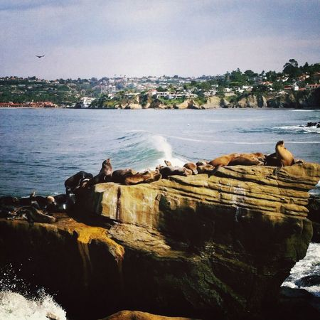 Sea lions soaking up the sun! Animals EyeEm Nature Lover Life Is A Beach Sea Life