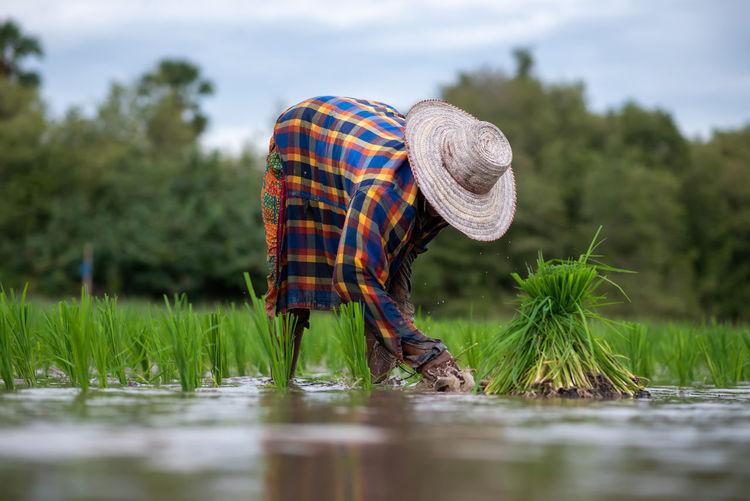 Farmer picking crops in farm
