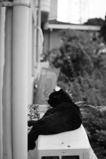 Black And White Domestic Cat Sitting Feline Cat