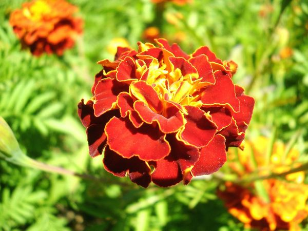 Flower Summer Red Relaxing Beautiful Nature Popular Photos Ukraine Color Photography