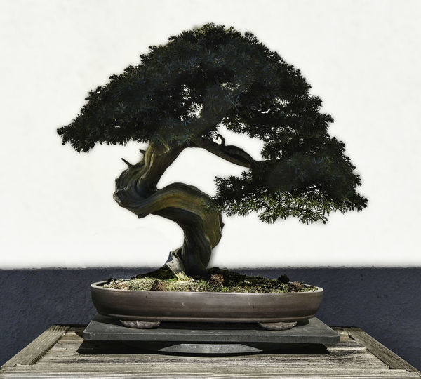 Plant Bonsai Tree Tree Nature Potted Plant Sculpture Creativity Wood - Material
