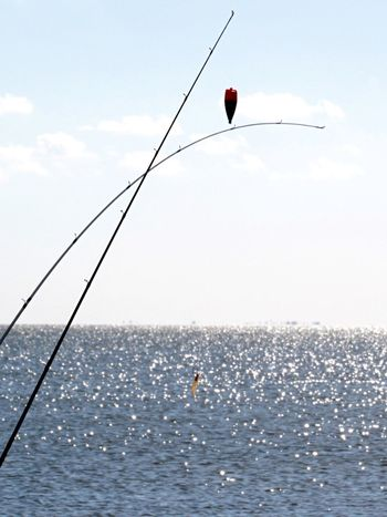 Fishing with Shrimp! Fishing Poles Beachlife Hanging Out Taking Photos Relaxing Enjoying Life Rockport Texas Caught One Catching A Fish Calm Water Walking Around Taking Pictures Beauty In Nature People Fishing Beach Photography Watching Nature