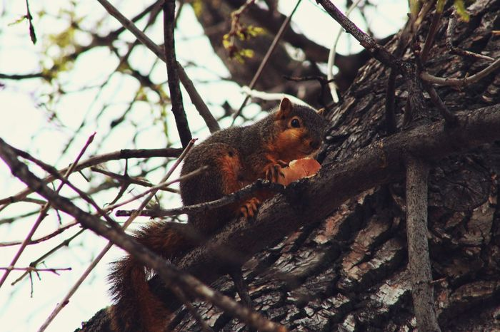 Squirrel Nature Bagels Trees Food
