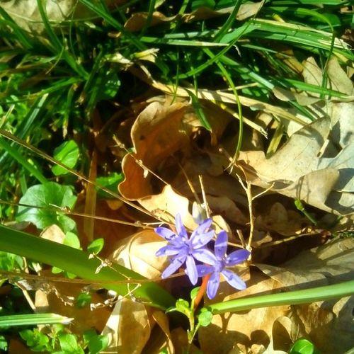 Timisoara Spring Flowers Sun nature naturelovers floral park garden