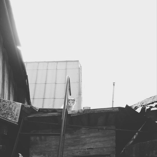 Наглый уличный кот 🐈EyeEmNewHere Black&white EyeEm Gallery Чб черно-белое черно-белое фото чбфотография чбфото чернобелоефото EyeEm Best Shots - Black + White Black & White BW Collection BW Transcience Cats Of EyeEm Cats 🐱 Cateyes