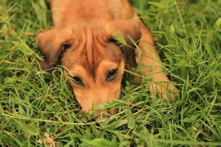 Portrait of dog lying on grass