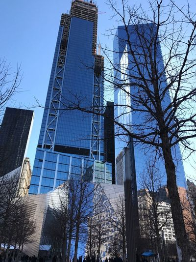 New York Trees Built Structure Architecture Building Exterior Low Angle View Building Tree Office Building Exterior City Sky Skyscraper Day Office No People Tower Outdoors Clear Sky Tall - High Nature Modern Plant