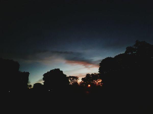 Tree Silhouette Night Sky Nature Outdoors No People