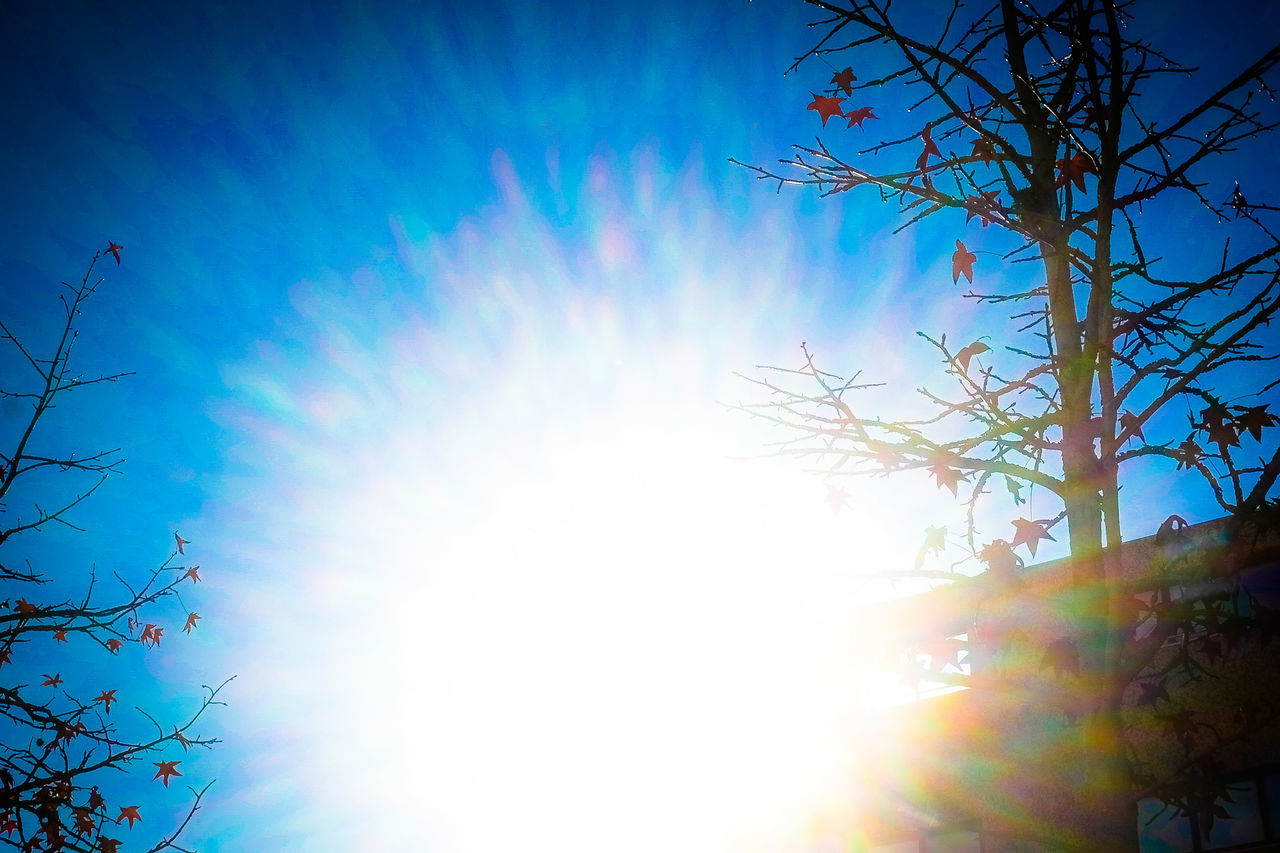 low angle view, tree, sunlight, sun, lens flare, sunbeam, branch, nature, sky, outdoors, day, growth, no people, beauty in nature, clear sky, bare tree, multi colored