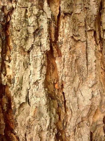 Bark Detail Of Tree Detail 5 Megapixel Photography Texture Surface Bark Tree Wood Close-up Pattern Smartphone Photography Backgrounds Full Frame Textured  Pattern Crumpled Textile Rough Close-up
