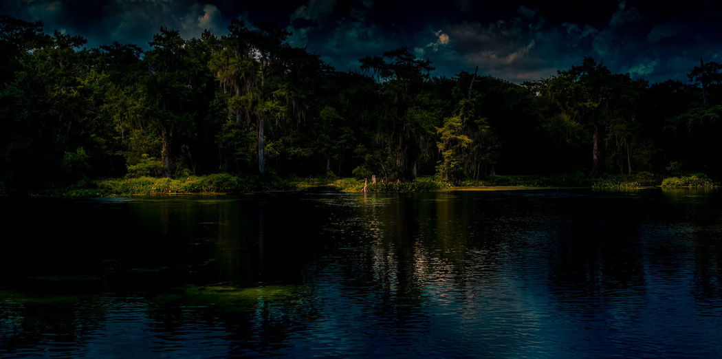 Night in the Swamp Beauty In Nature Dark Florida Forest Nature Night No People Outdoors Reflection Scenics Swamp Tranquility Tree Water Wetlands WoodLand