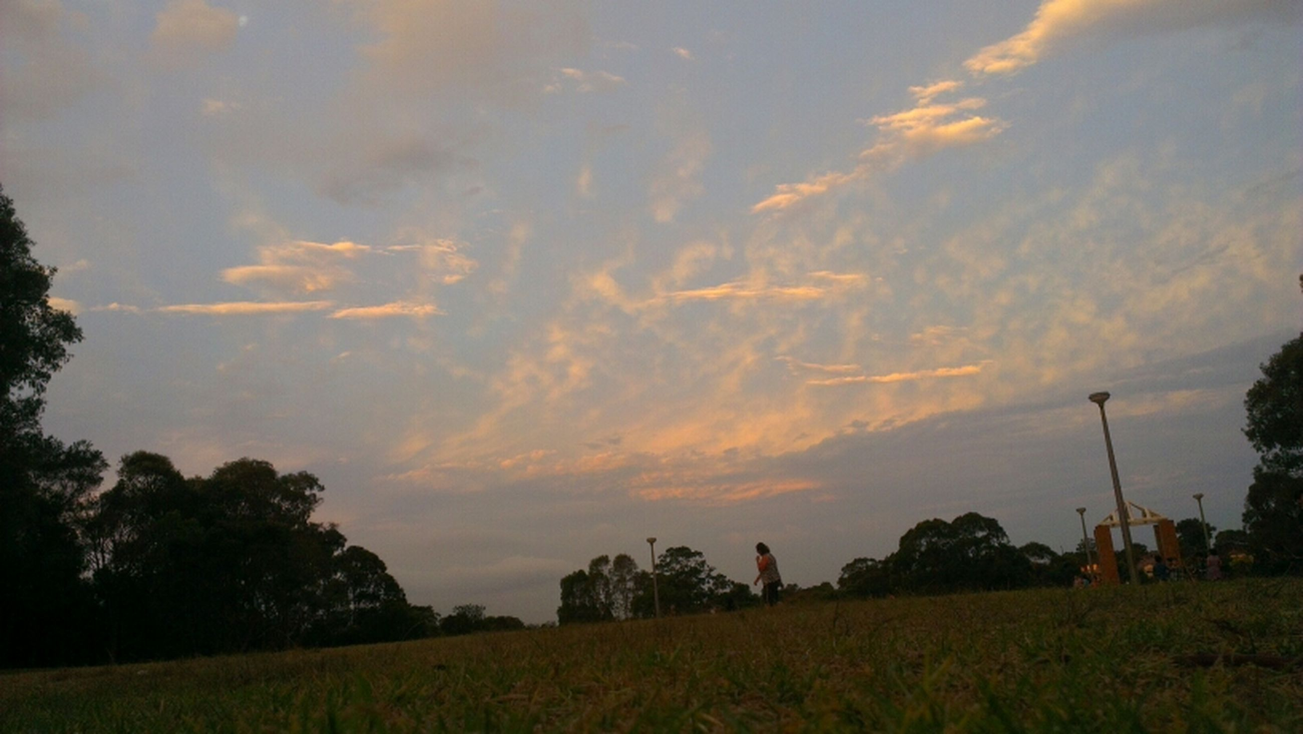 sky, sunset, tranquil scene, landscape, tranquility, tree, scenics, field, beauty in nature, cloud - sky, nature, silhouette, grass, idyllic, cloud, growth, cloudy, non-urban scene, orange color, outdoors
