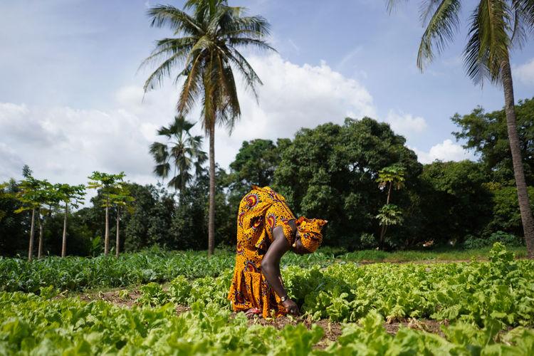 Farmers harvesting vegetables at farm against sky