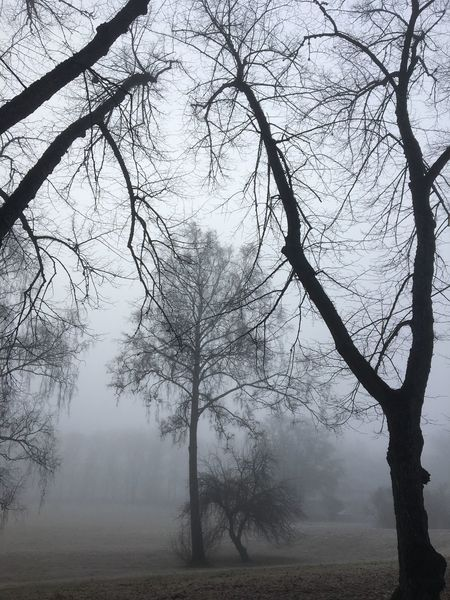 Tree Nature Tranquility Bare Tree Landscape Beauty In Nature Fog Branch No People Tree Trunk Scenics Sky Outdoors Day Hazy  Lone IPhone 6s No Filter Tranquil Scene Morning Morning Fog Misty Misty Morning Grey Morning Foggy