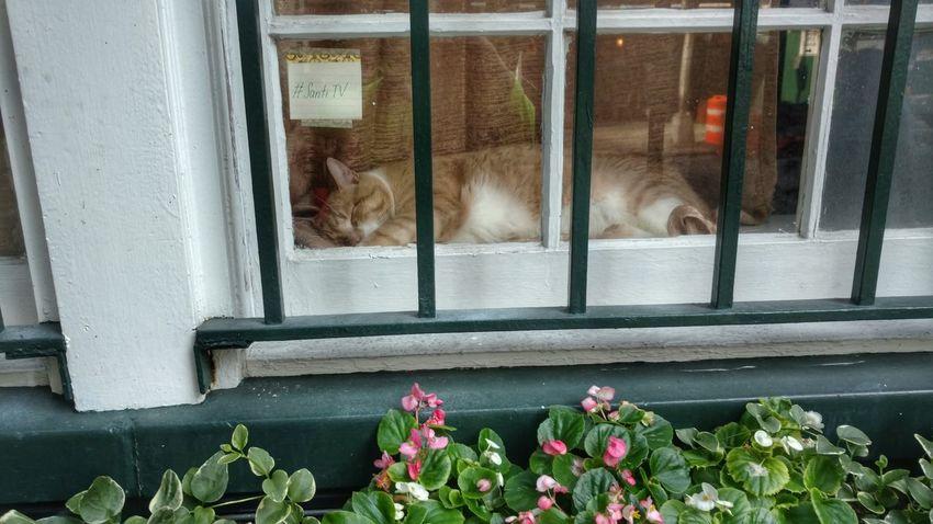 Street Scene New York City Cats 🐱