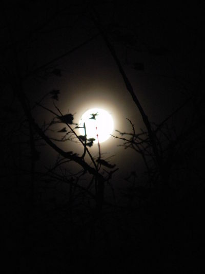 Beauty In Nature Bright Night Cold Temperature Dark Day Full Frame Illuminated Low Angle View Moon Moon Light Moonlight Nature Night Sky Nighttime No People Outdoors Silhouette Sky Supermoon