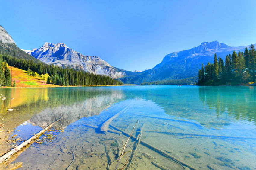 Emerald Lake,Yoho National Park in Canada Beauty In Nature Blue Clear Sky Cold Temperature Day Emerald Lake,canada Lake Landscape Mountain Mountain Range Nature No People Outdoors Reflection Scenics Sky Snow Tranquil Scene Tranquility Tree Water Yoho National Park