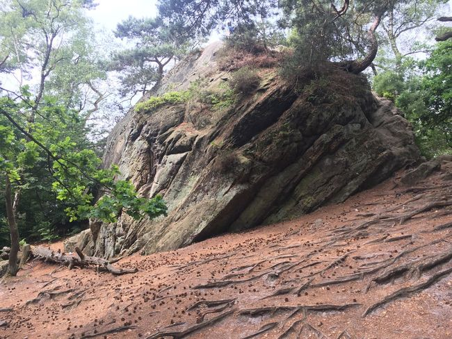 Rock Formation Rock - Object Tree Nature Day No People Beauty In Nature Outdoors Scenics Sky Germany Ibbenbüren Wood Wanderlust Hiking Adventure Enchanted  Enchanted Forest EyeEmNewHere